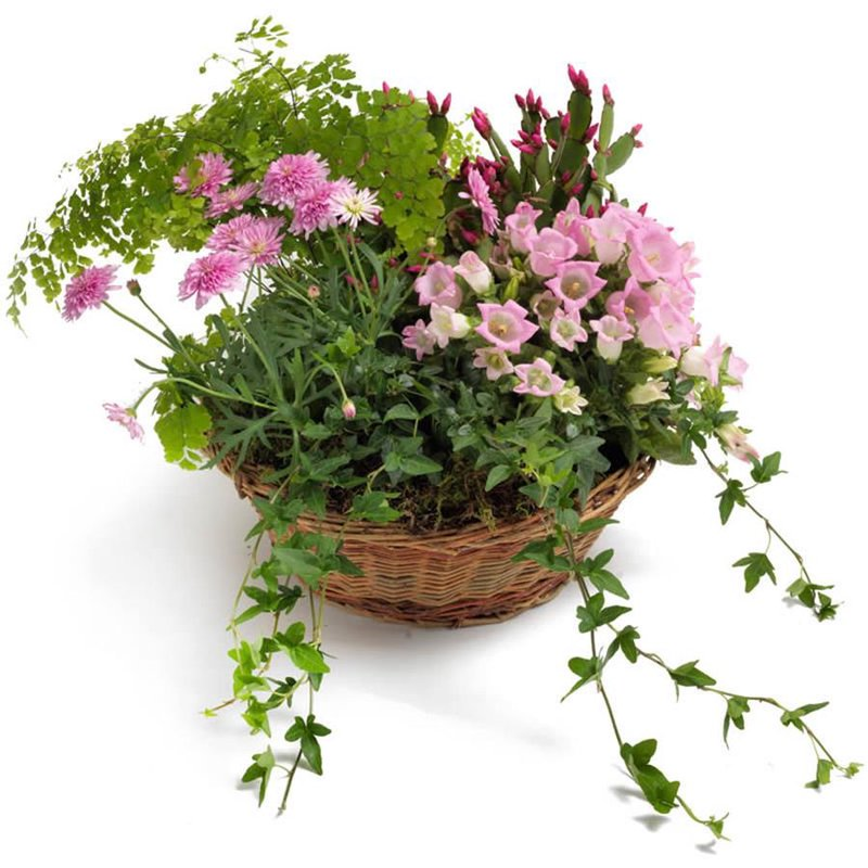Plant mix in basket
