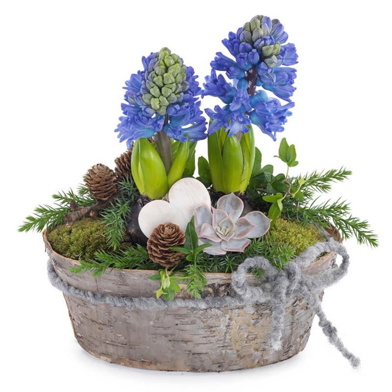 Composition Blue Hyacinths